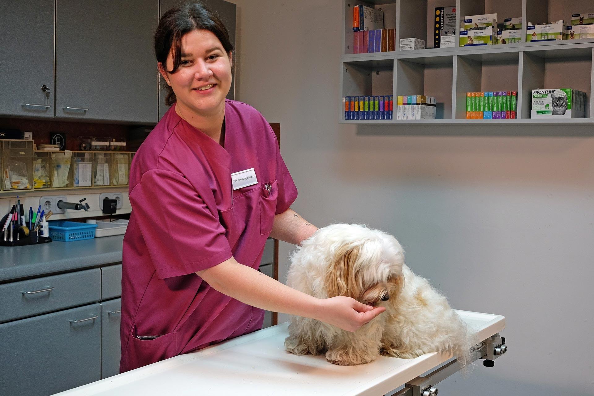 Hund sitzt am Untersuchungstisch. Helferin hält den Patienten.