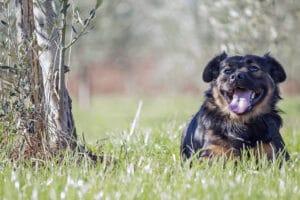 Hund auf einer Wiese