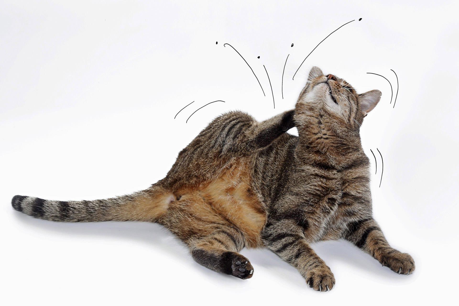 Die Katze und ihre Flöhe